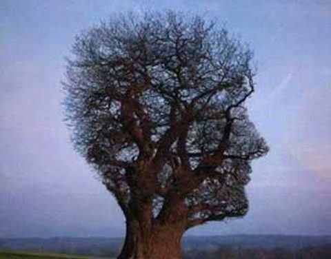 Metáforas y analogía: pensar con cuerpos y palabras