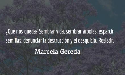 Destrucción de jacarandas; espejo de una sociedad. Marcela Gereda.