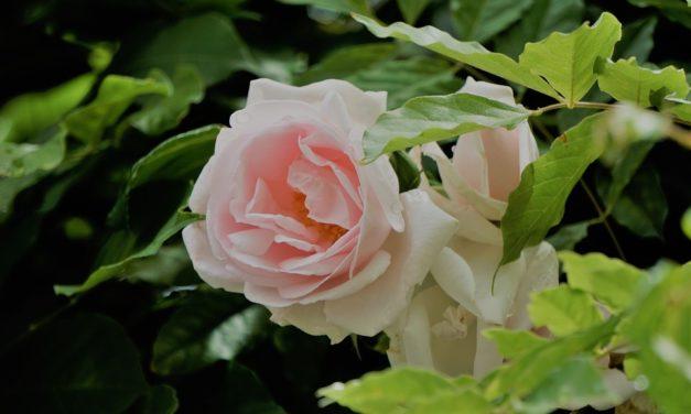 Las flores alegran la vida. Oxwell L'bu.