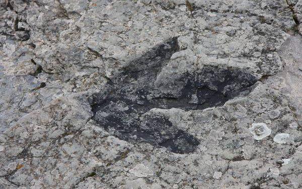 La cabeza del dinosaurio. Javier Payeras.