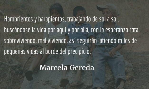 Félix, el lustrador y cortador de café. Marcela Gereda.