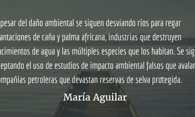 Devastación ambiental. María Aguilar.