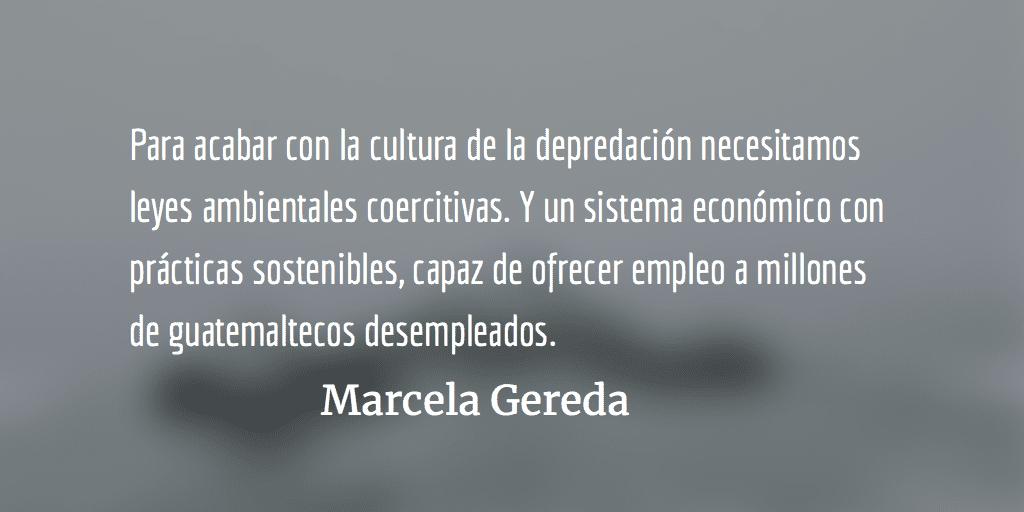 Encrucijada ambiental. Marcela Gereda.