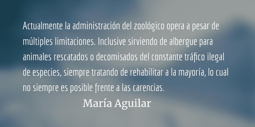 Quetzaltenango irrespeta la vida animal. María Aguilar.